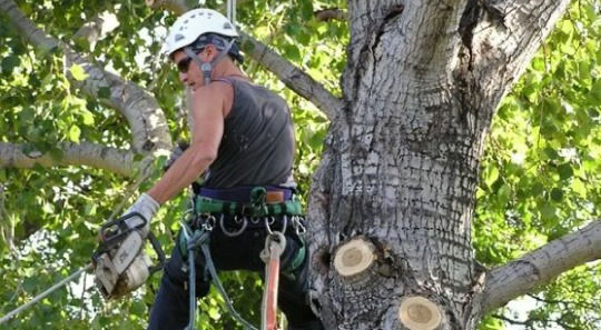 Riverview Tree Removal Service