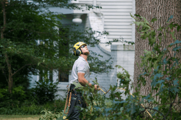 Tree Removal Riverview