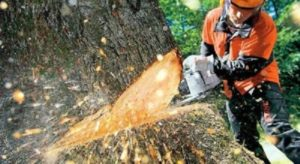 Tree Removal West Ipswich