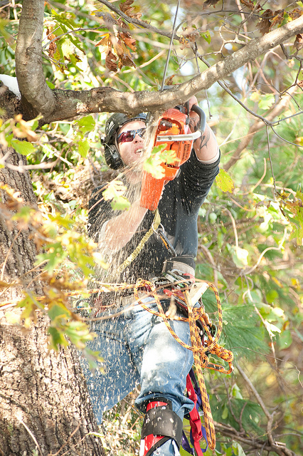 Tree Pruning One Mile